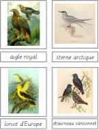 Bird Matching Cards (French)