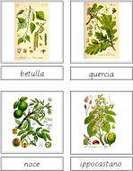 Tree Matching Cards (Italian)
