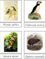 Bird Matching Cards (Latin)